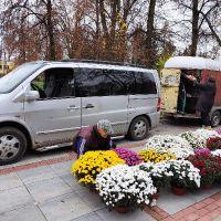 Ostrów Lubelski pełen pięknych chryzantem. Gmina wsparła producentów oraz skorzystała z kwiatów przekazywanych do ARiMR